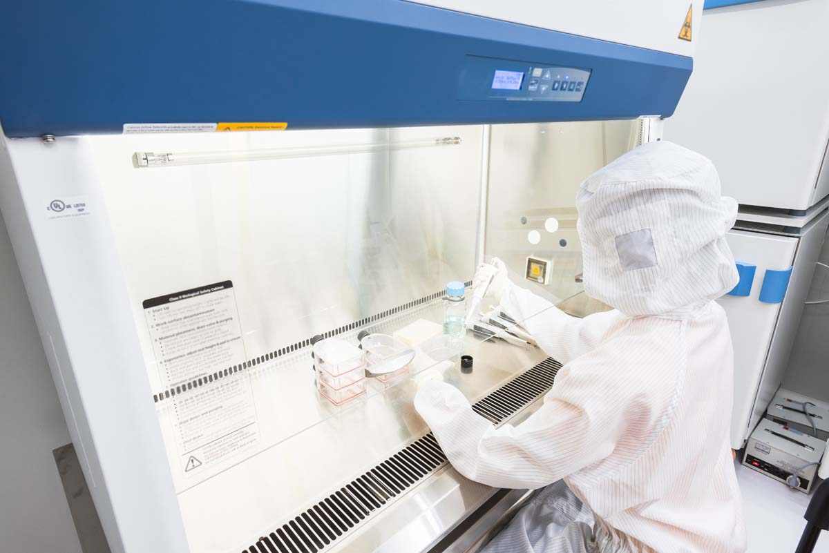 A scientist in sterile coverall gown pipetting medium or reagents for cell culture experiment in biological safety cabinet. Doing biological research in clean environment. Cleanroom facility